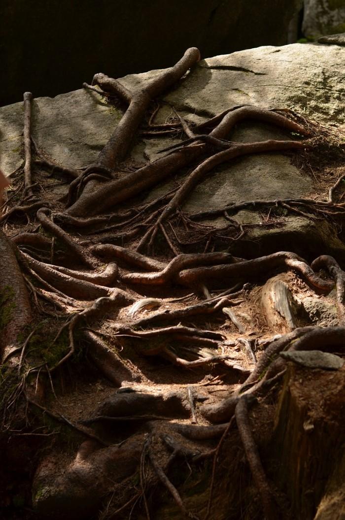 Zillergrund Wald (foto: Oli)
