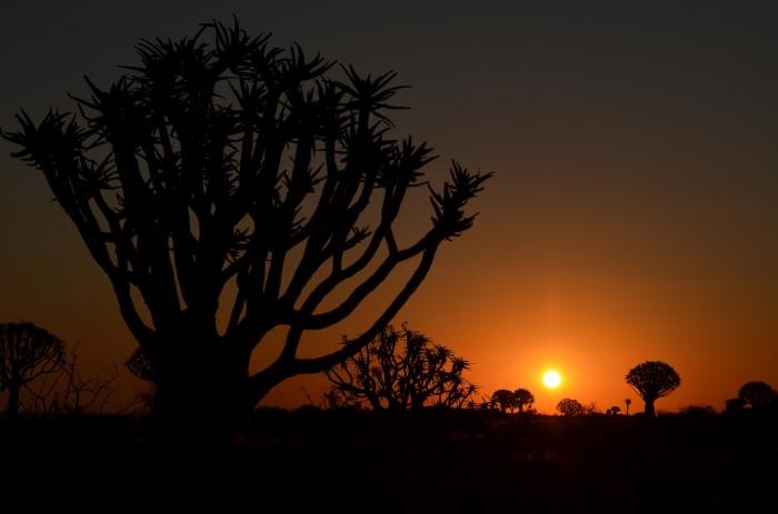 Kokerboom forest, Namíbia (foto: Oli)