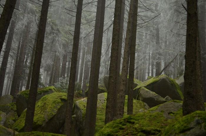 Mrazivé Loučovice (foto: Oli)