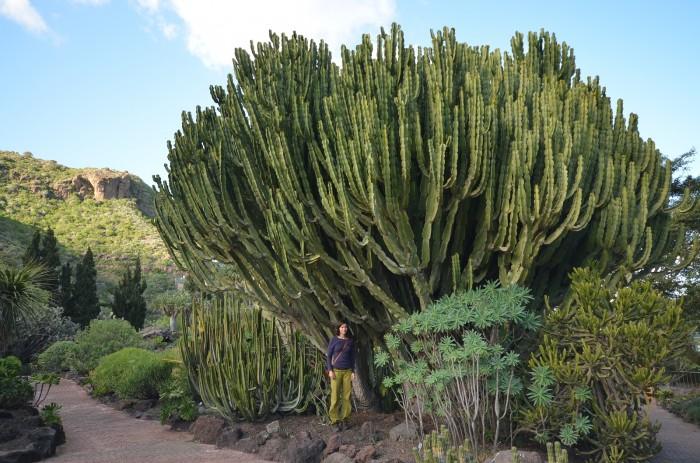 Spočiatku sme nad rozmermi kaktusov a sukulentov krútili hlavami. Potom sme si zvykli (foto: Oli)
