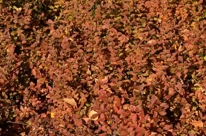 Jesenná veselica (foto: Oli)