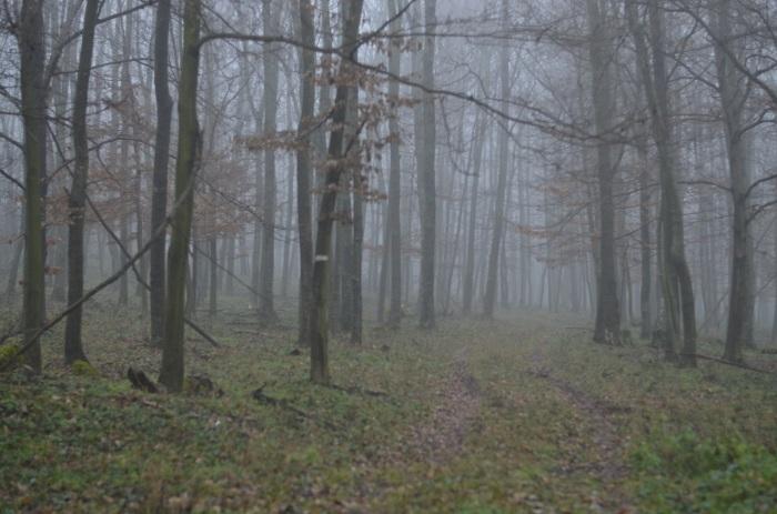 ... a na konci bola hmla (foto: Oli)