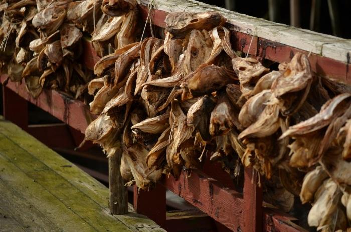 Sušené tresčie hlavy v Nusfjorde, Flakstadøy (foto: Oli)