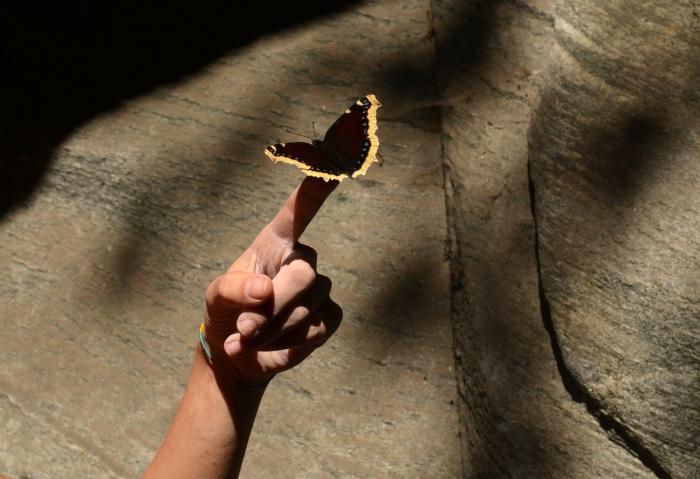 Zaklínačka motýľov (foto: Oli)
