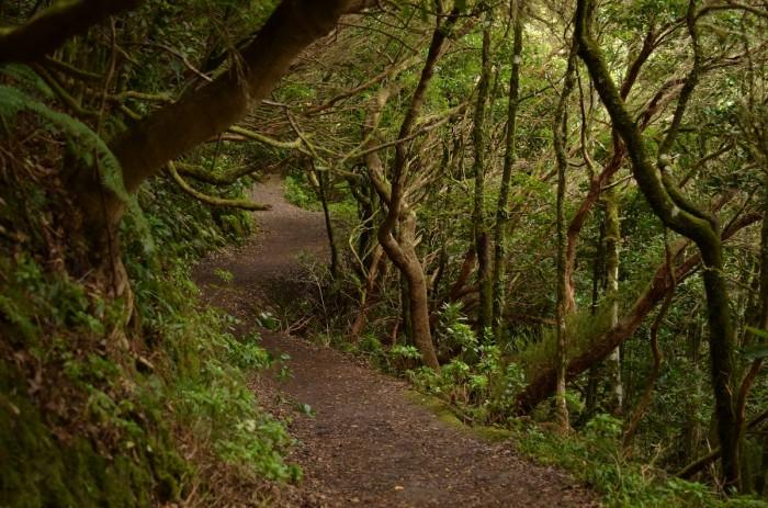 Vavrínové lesy v Anage (foto: Oli)